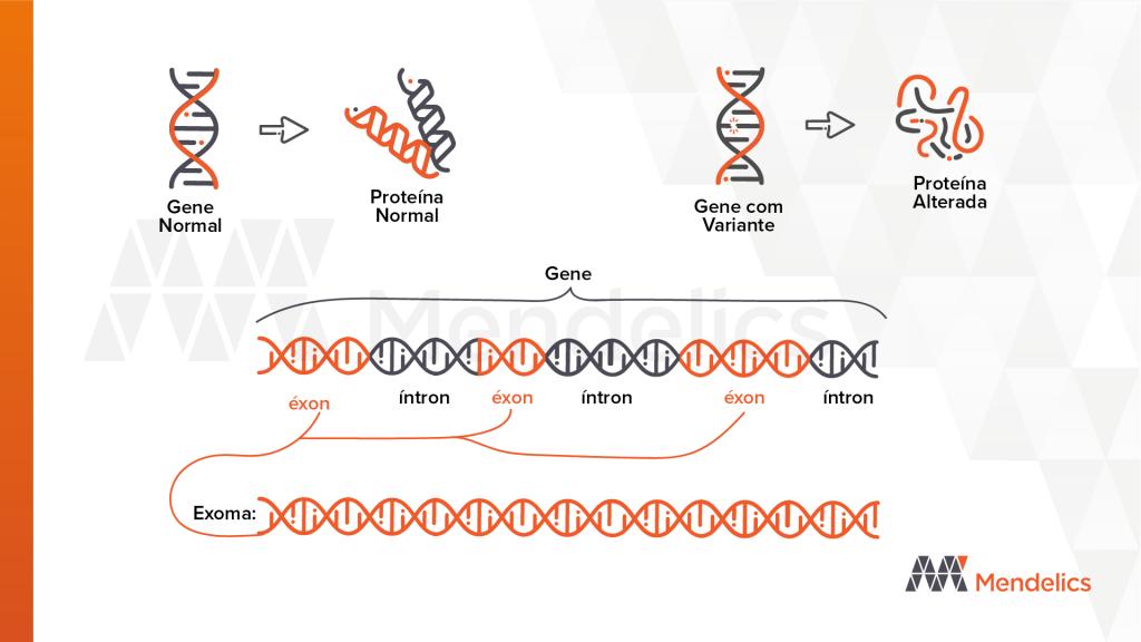 gene, exon, exoma