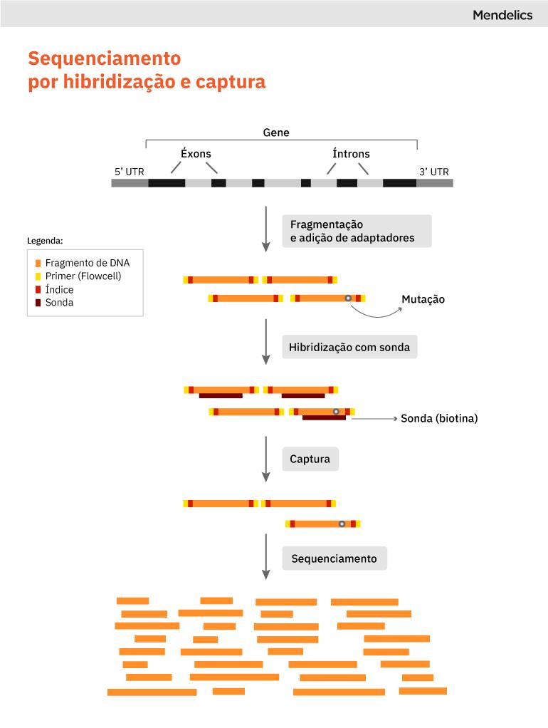 ngs targeted sequencing sequenciamento por hibridização