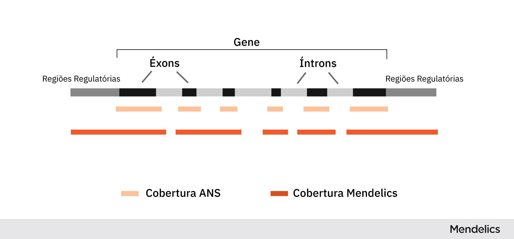 Imagem representando as regiões analisadas de um gene no diagnóstico genético. Comparação entre as especificações da ANS e a análise da Mendelics.