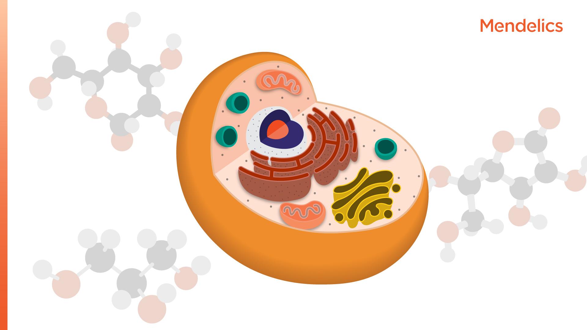Você sabe o que são Erros Inatos do Metabolismo?
