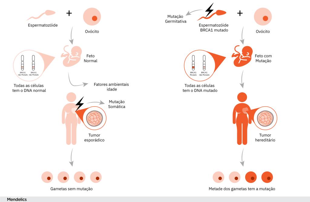 origens do câncer hereditário e germinativo